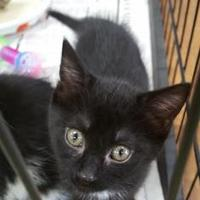 Adopt A Pet :: Arabella - Burlington, NC