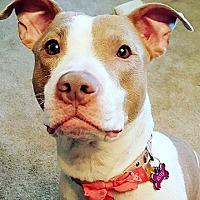 Adopt A Pet :: Roxy - Cincinnati, OH