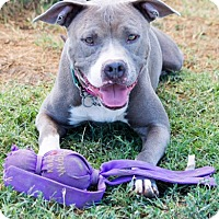 Adopt A Pet :: Elena,major love - Sacramento, CA