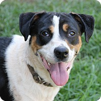 Adopt A Pet :: Tanner - Pittsboro, NC