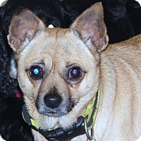 Adopt A Pet :: PATIENCE - Anderson, SC