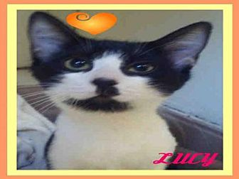 Domestic Mediumhair Cat for adoption in Fort Walton Beach, Florida - LUCY