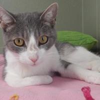 Adopt A Pet :: Reggie - Clearfield, PA