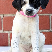 Adopt A Pet :: Quinby - Waldorf, MD