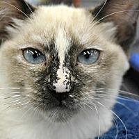Adopt A Pet :: Jasmine - Eureka, CA