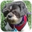 Photo 4 - Shih Tzu Mix Dog for adoption in Los Angeles, California - Domino