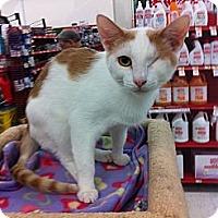 Adopt A Pet :: BLINK: special needs - Phoenix, AZ