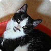 Adopt A Pet :: Mork - Port Republic, MD