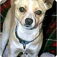 Adopt A Pet :: YODA - dewey, AZ