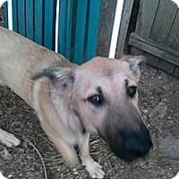Adopt A Pet :: Shirley - New Boston, NH