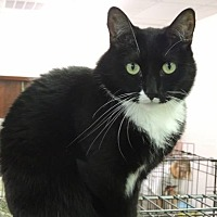 Adopt A Pet :: Fergie - Pineville, NC