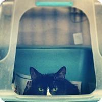Adopt A Pet :: White Socks - New York, NY