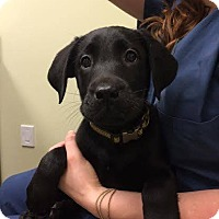 Adopt A Pet :: Morty - Cumming, GA