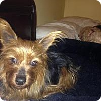 Adopt A Pet :: Patsy - Mt Gretna, PA