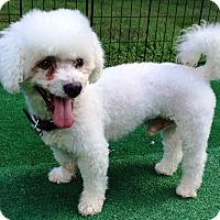 Adopt A Pet :: Wonder - Dover, MA