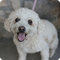 Adopt A Pet :: Bailey - Canoga Park, CA