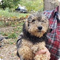 Adopt A Pet :: Praline - Antioch, IL