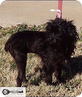Terrier (Unknown Type, Small) Mix Dog for adoption in DeForest, Wisconsin - Baby