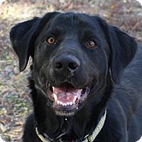 Adopt A Pet :: Carson - Phoenix, AZ