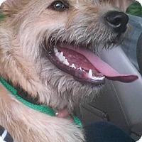 Adopt A Pet :: Rigby - Greensboro, MD