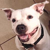 Adopt A Pet :: Punkin-17 - Lithia, FL