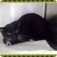 Adopt A Pet :: COOL - Marietta, GA