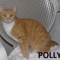 Adopt A Pet :: Polly - Franklin, NC