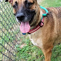 Adopt A Pet :: Jade - Atlanta, GA