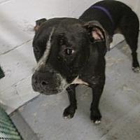 Adopt A Pet :: Fiji - Weatherford, TX