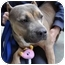 Photo 4 - American Pit Bull Terrier Dog for adoption in Los Angeles, California - China