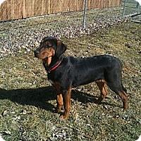 Adopt A Pet :: Jayne - Linton, IN