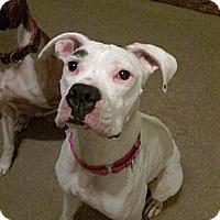 Adopt A Pet :: Sierria - St. Robert, MO