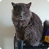 Adopt A Pet :: Tom Selleck - Orillia, ON