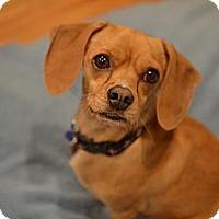 Adopt A Pet :: Charlie - Los Angeles, CA