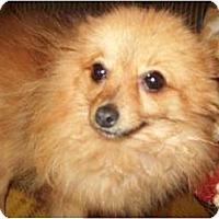 Adopt A Pet :: Cara - Butler, OH