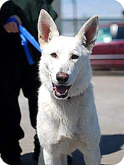 Shepherd (Unknown Type) Mix Dog for adoption in Detroit, Michigan - Summer-Adopted!