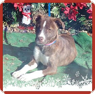 Hound (Unknown Type) Mix Puppy for adoption in Marietta, Georgia - AUDI