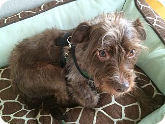 Terrier (Unknown Type, Medium) Mix Dog for adoption in San Francisco, California - Crosby