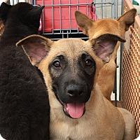 Adopt A Pet :: Giovanni - Los Angeles, CA