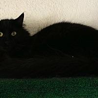 Adopt A Pet :: Precious - Prescott, AZ