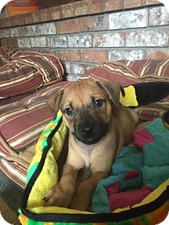 Shepherd (Unknown Type) Mix Puppy for adoption in Concord, California - Pele