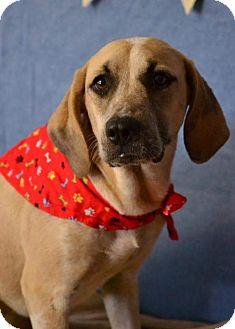 Hound (Unknown Type)/Catahoula Leopard Dog Mix Dog for adoption in Okeechobee, Florida - Sandy