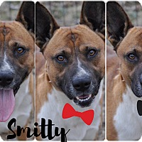 Adopt A Pet :: Smitty in CT - East Hartford, CT