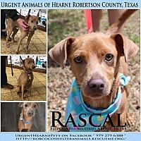 Adopt A Pet :: Rascal - Hearne, TX