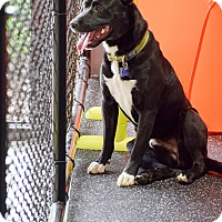 Adopt A Pet :: Chubby - Meridian, ID