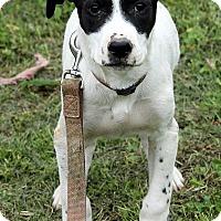 Adopt A Pet :: Bailey - Harrisonburg, VA