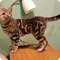 Adopt A Pet :: Aurora - Raritan, NJ