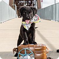 Adopt A Pet :: Kodak - West Orange, NJ