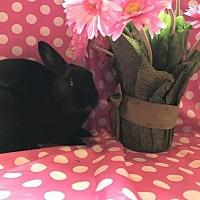 Adopt A Pet :: Onyx - Columbus, OH