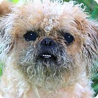 Adopt A Pet :: CALVIN(OUR